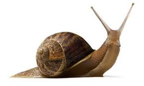 caracol.png