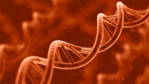 Cadeia de DNA