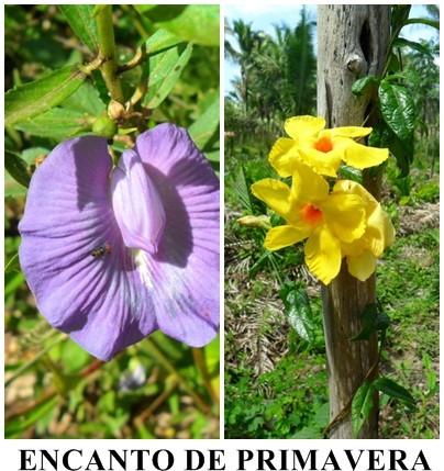 ENCANTO/PRIMAVERA/POESIA