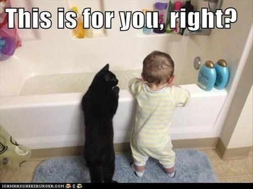 a-cat-taking-a-bath-funny-pictures.jpg