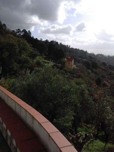 Vegetação. Casa Amarela. 2017.jpg