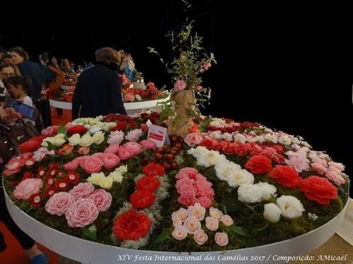 8 - Festa Internacional das Camélias - Celorico d