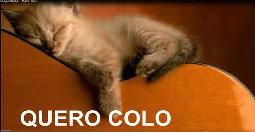 QUERO COLO/ GATO