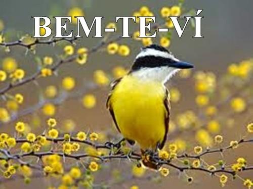 BEM-TE-VÍ