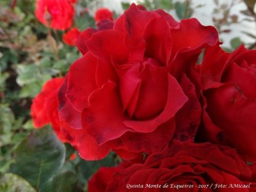 Rosas - Junho 2017 - DSC02498.jpg