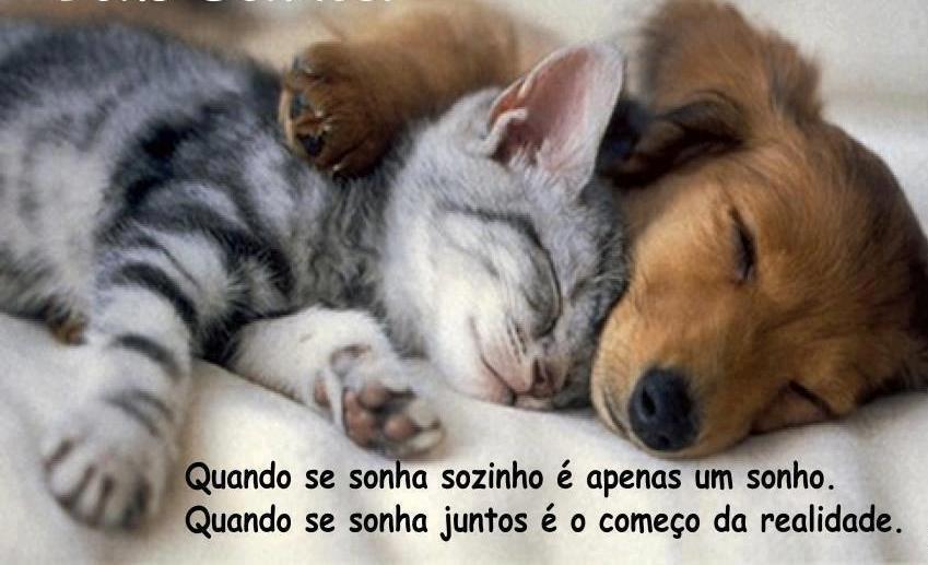 Amigos - Cão e Gato.jpeg
