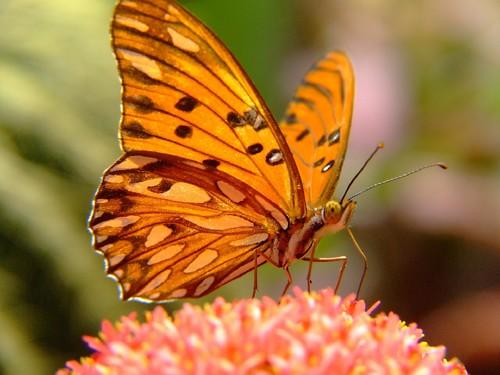 pingo-silver-butterfly-847898_1920.jpg