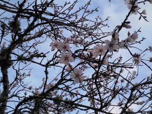 Foto1925 Primavera original DAPL 2015.jpg
