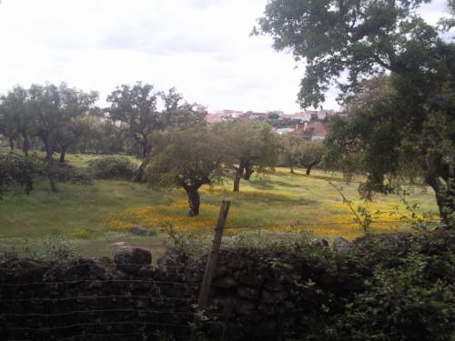 Primavera. Alagoa. Alentejo. Foto original DAPL. jpg