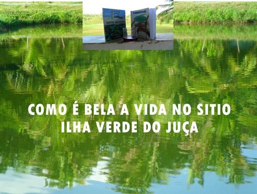 FÉRIA DE DGAUDIO/SITIO ILHA VERDE DO JUÇA