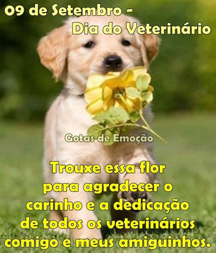dia-do-veterinario_020.jpg