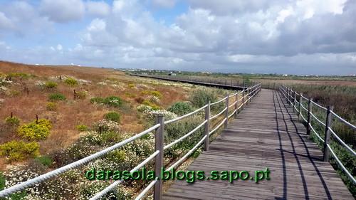Praia_grande_16.jpg