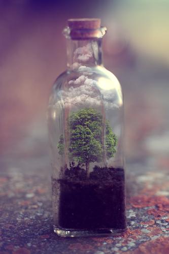 bottle-cute-nature-photography-Favim.com-2303485.p