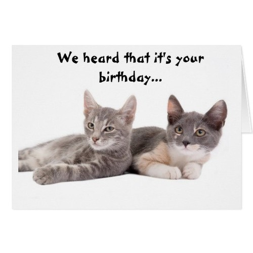 funny_cat_give_us_tuna_birthday_card-r4b9e33e71093