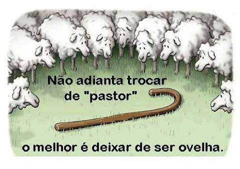 ovelha2.jpg