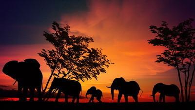 elefantes3.jpg