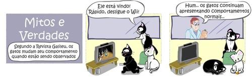 veterinario-gatos-caxias-38.jpg