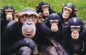 macaco2.jpg