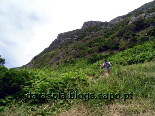 Azores_flores_faja_grande_14.JPG