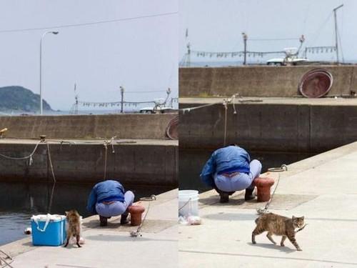 Gato ladrão