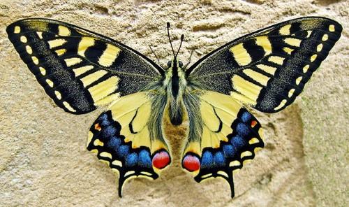 butterfly-1228639_1920.jpg