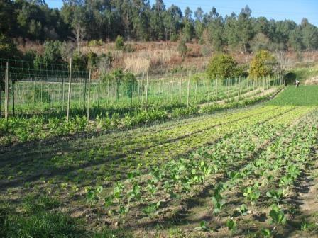 Quinta de Lameirões
