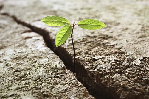 resiliencia-no-trabalho-1.jpg