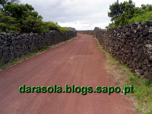azores_pico_criacao_velha_15.JPG