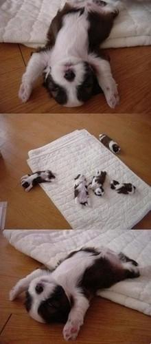 E agora... Dormir!