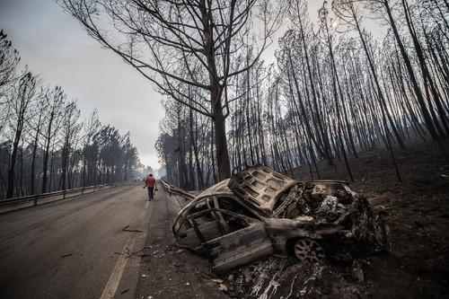 20170618_incendio_pedrogao_grande_floresta_2.jpg