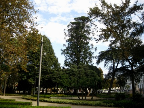 árvores (Cordoaria) 2.JPG