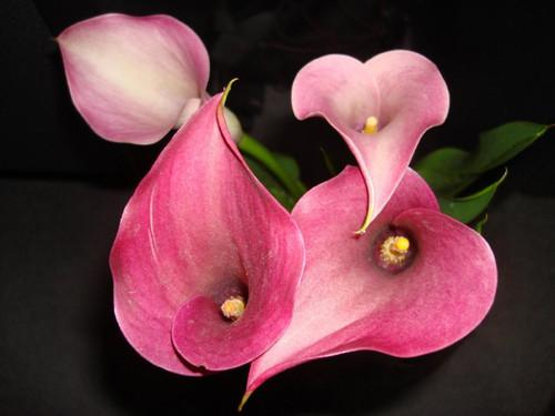Corações em flor.jpg