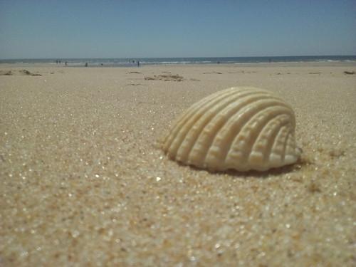 Concha na praia. Foto original DAPL 2016.jpg