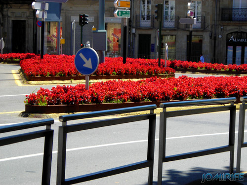 Santiago de Compostela (1) Flores