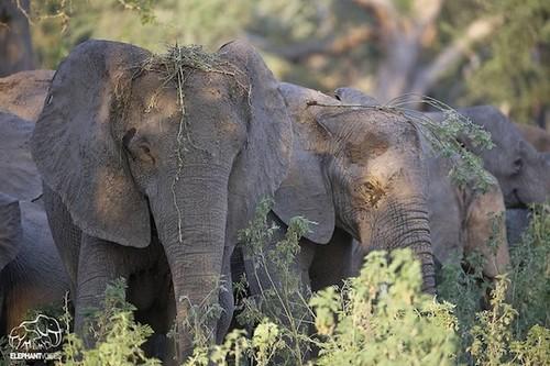 elephants6.jpg