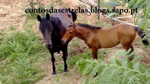 cavalos1junho2017blog.png
