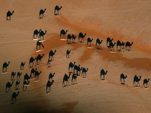 george-steinmetz-camels_3977_600x450.jpg
