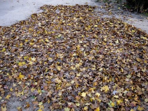 folhas mortas.JPG