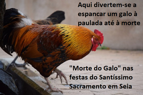 MORTE DO GALO.png