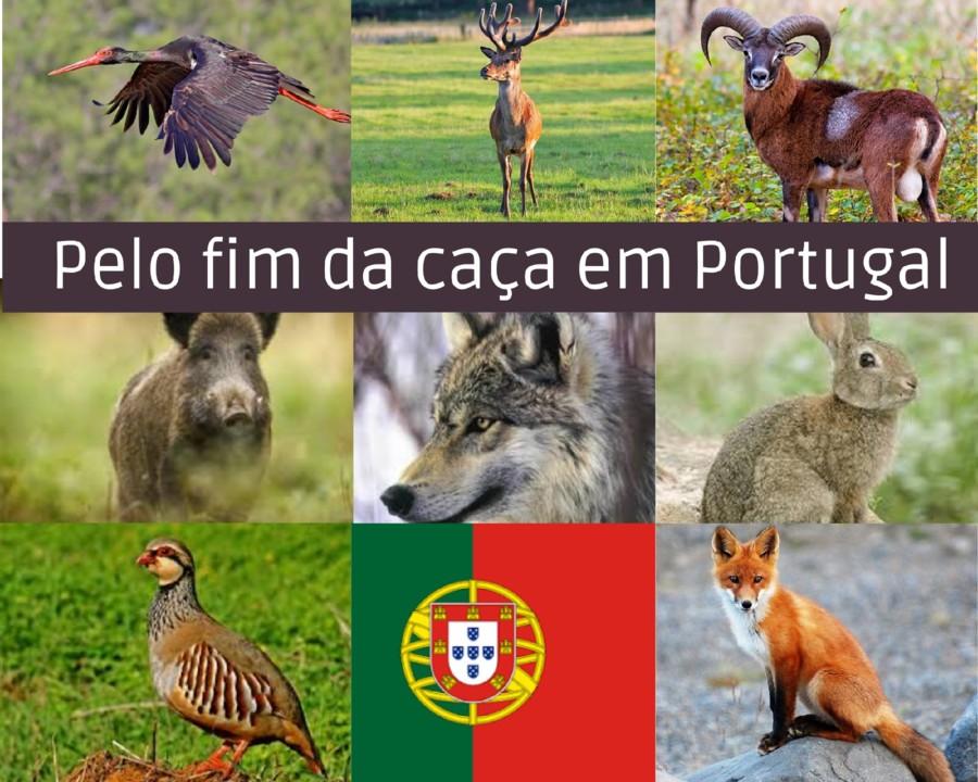 PELO FIM DA CAÇA.jpg