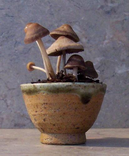 Kusamono cogumelos