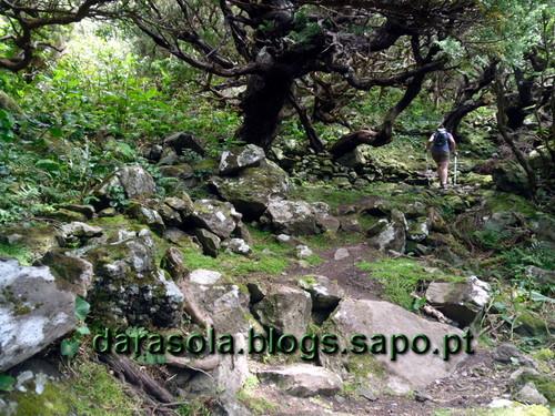 Azores_flores_faja_grande_15.JPG