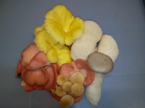 cogumelos2.jpg