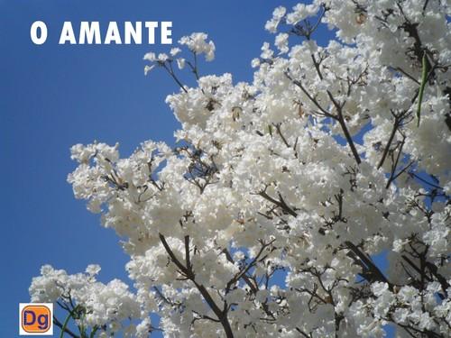 IPE/PRIMAVERA/O AMANTE