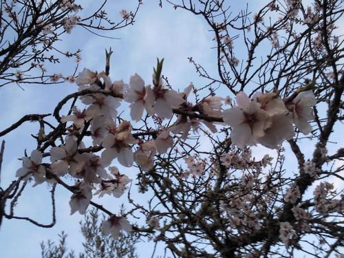 Amendoeira florida - Original DAPL 2015 (2).jpg