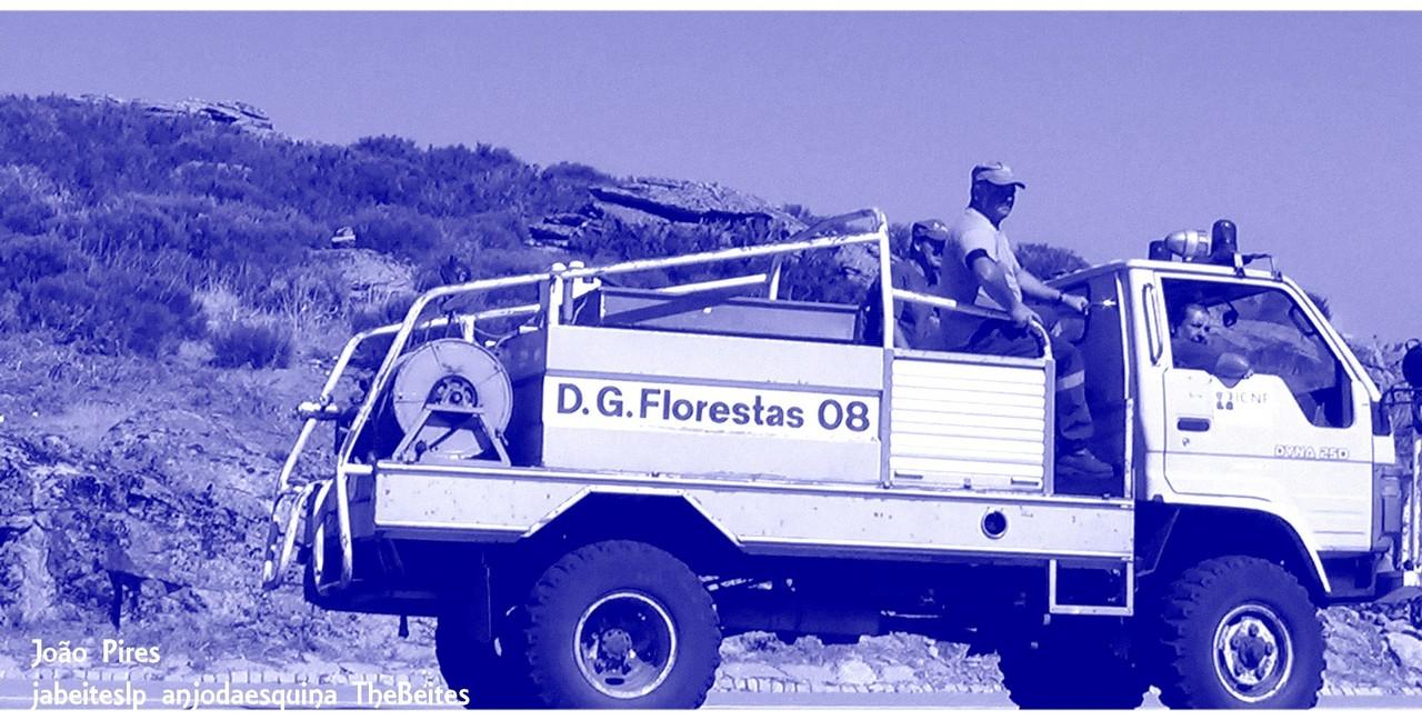DGF 08.jpg
