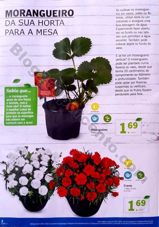 mercado plantas lidl_2.jpg