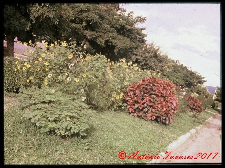 Nampula flores.jpg