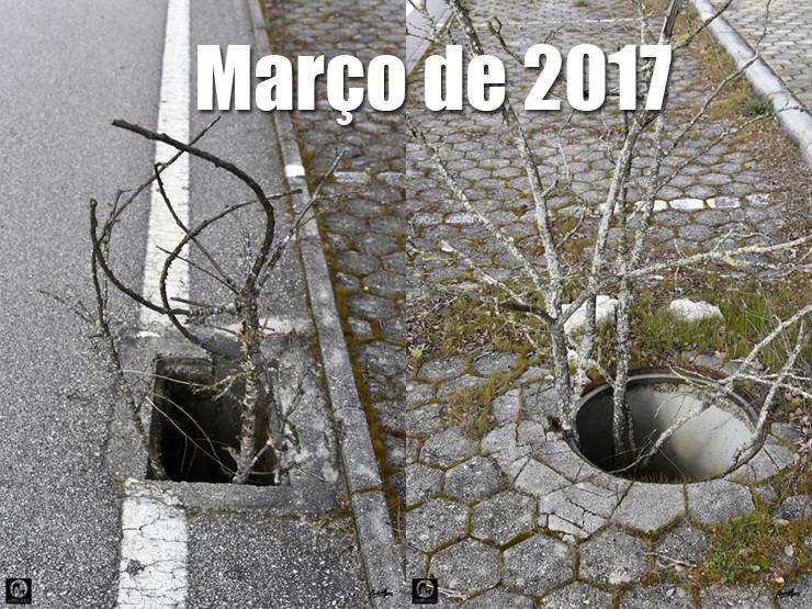 03 02 Março 2017 - 740.jpg
