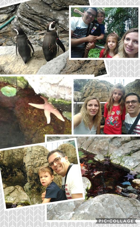 Collage 2017-08-31 23_04_04.jpg